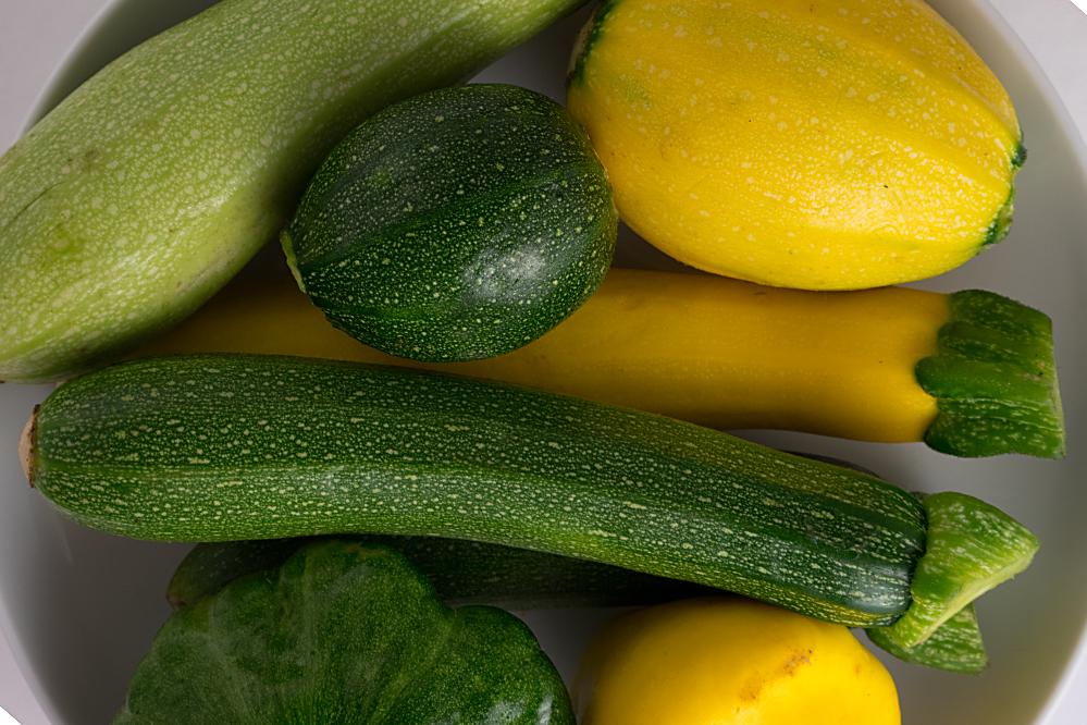 runde zucchini pflanzen